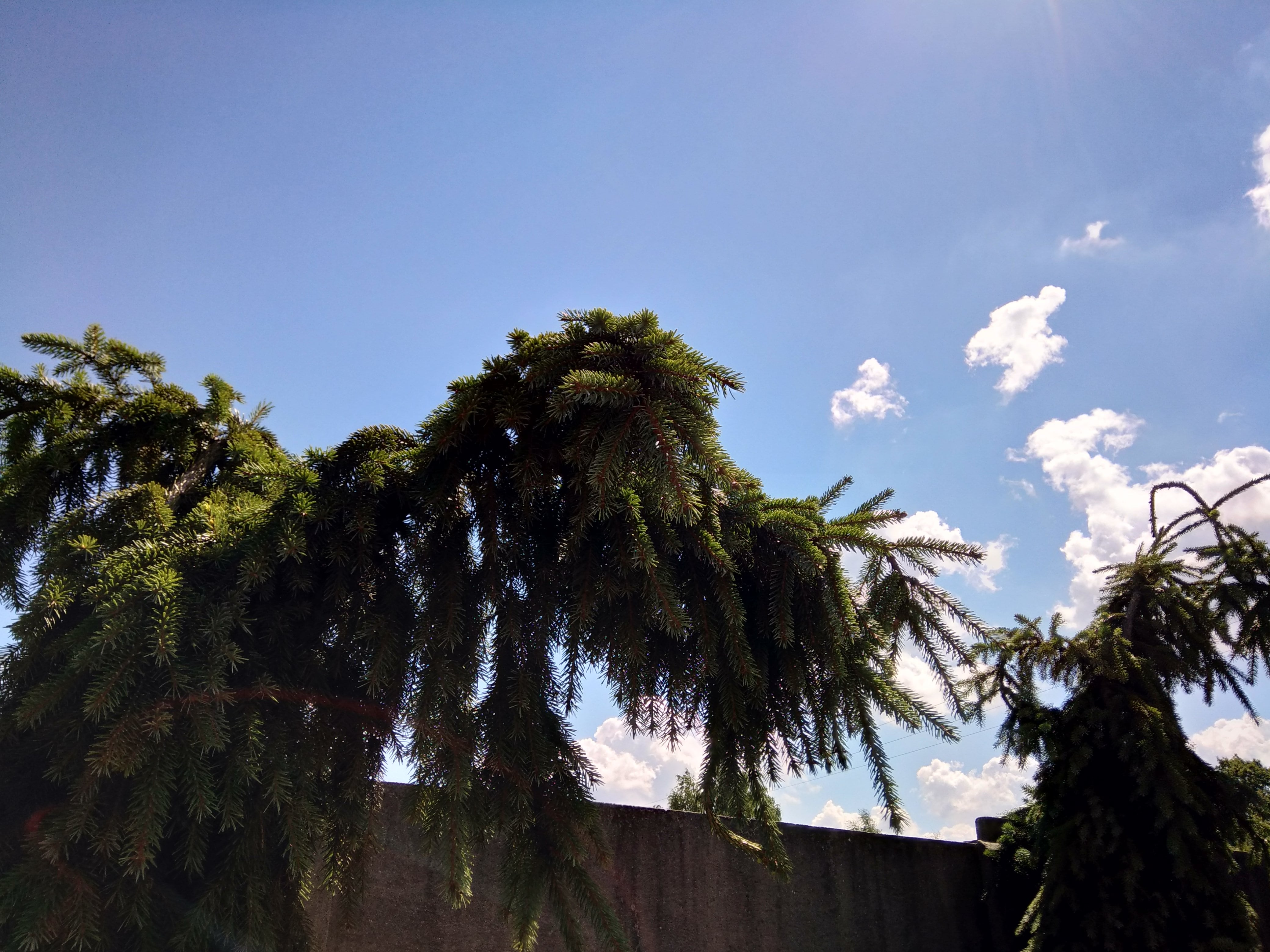 Słoneczna pogoda - Wiko WiM Lite