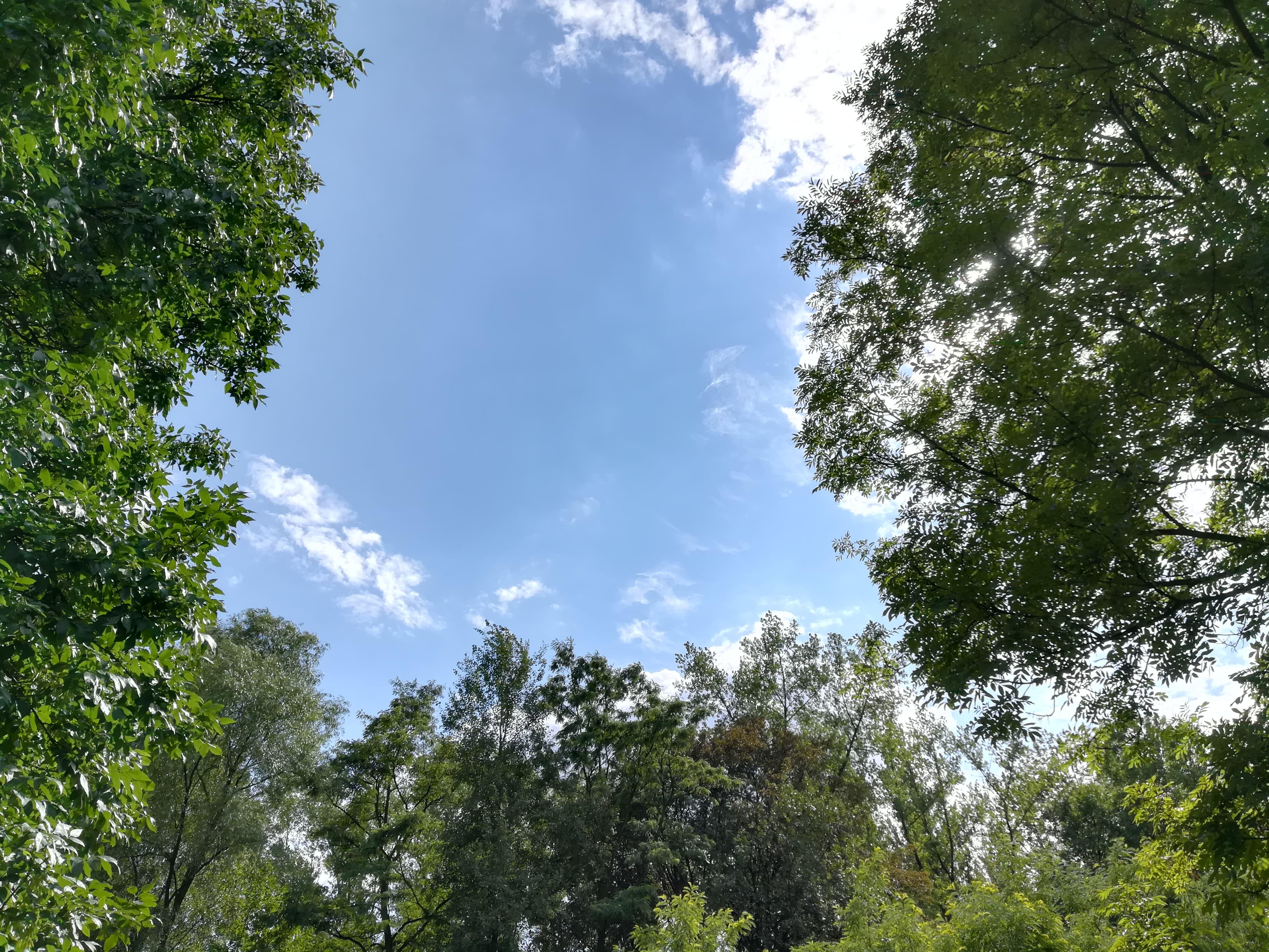 Słoneczna pogoda - Huawei P9 Lite 2017