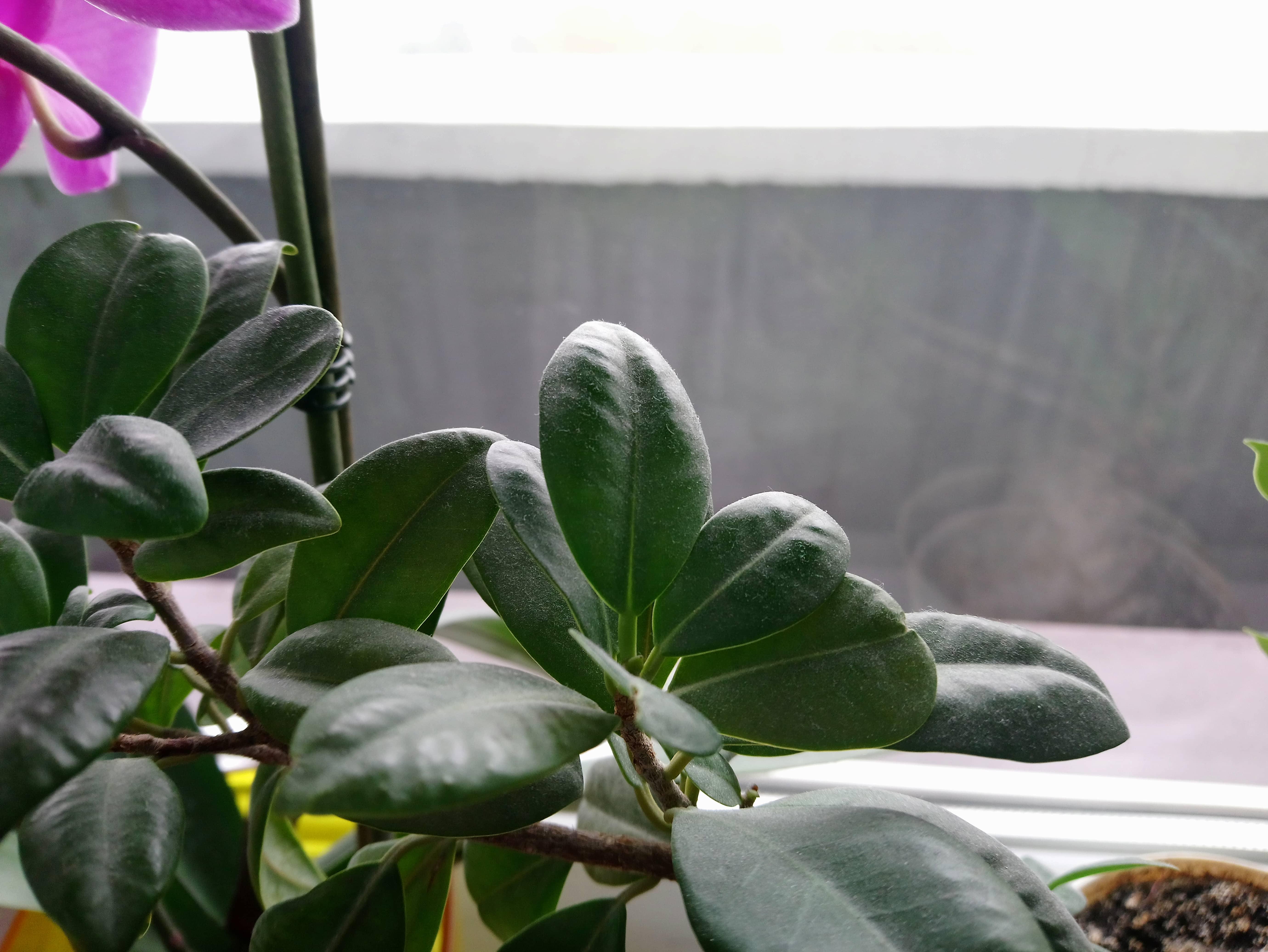 Zdjęcia makro - Sony Xperia XA1 Plus