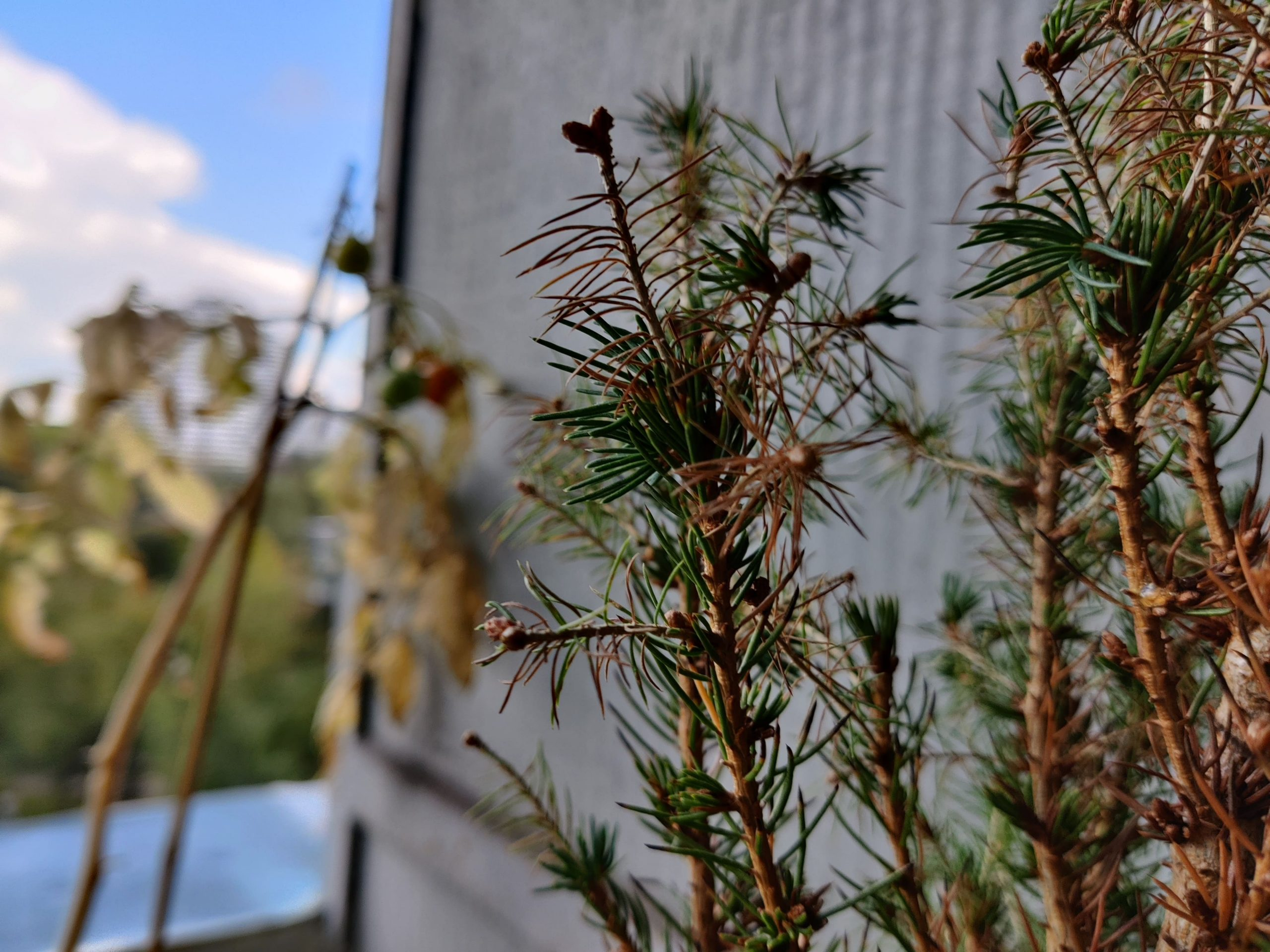 Zdjęcia makro - OnePlus Nord