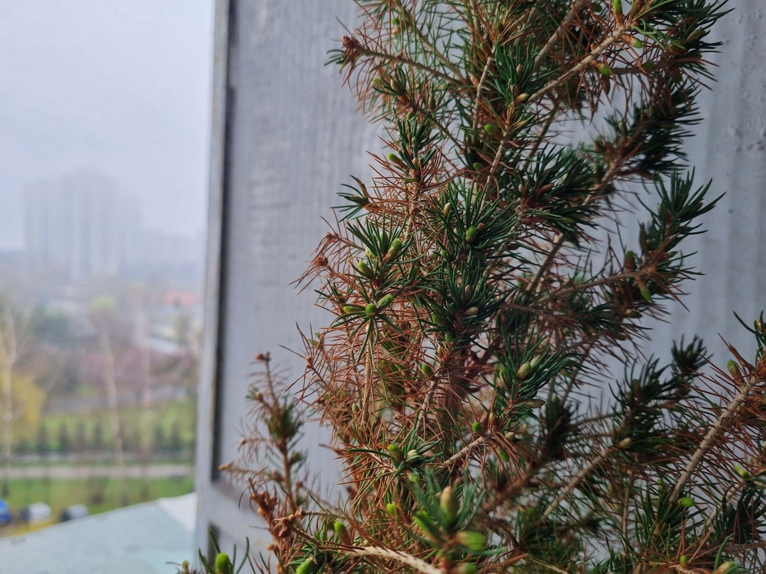 Zdjęcia makro - Samsung Galaxy S21