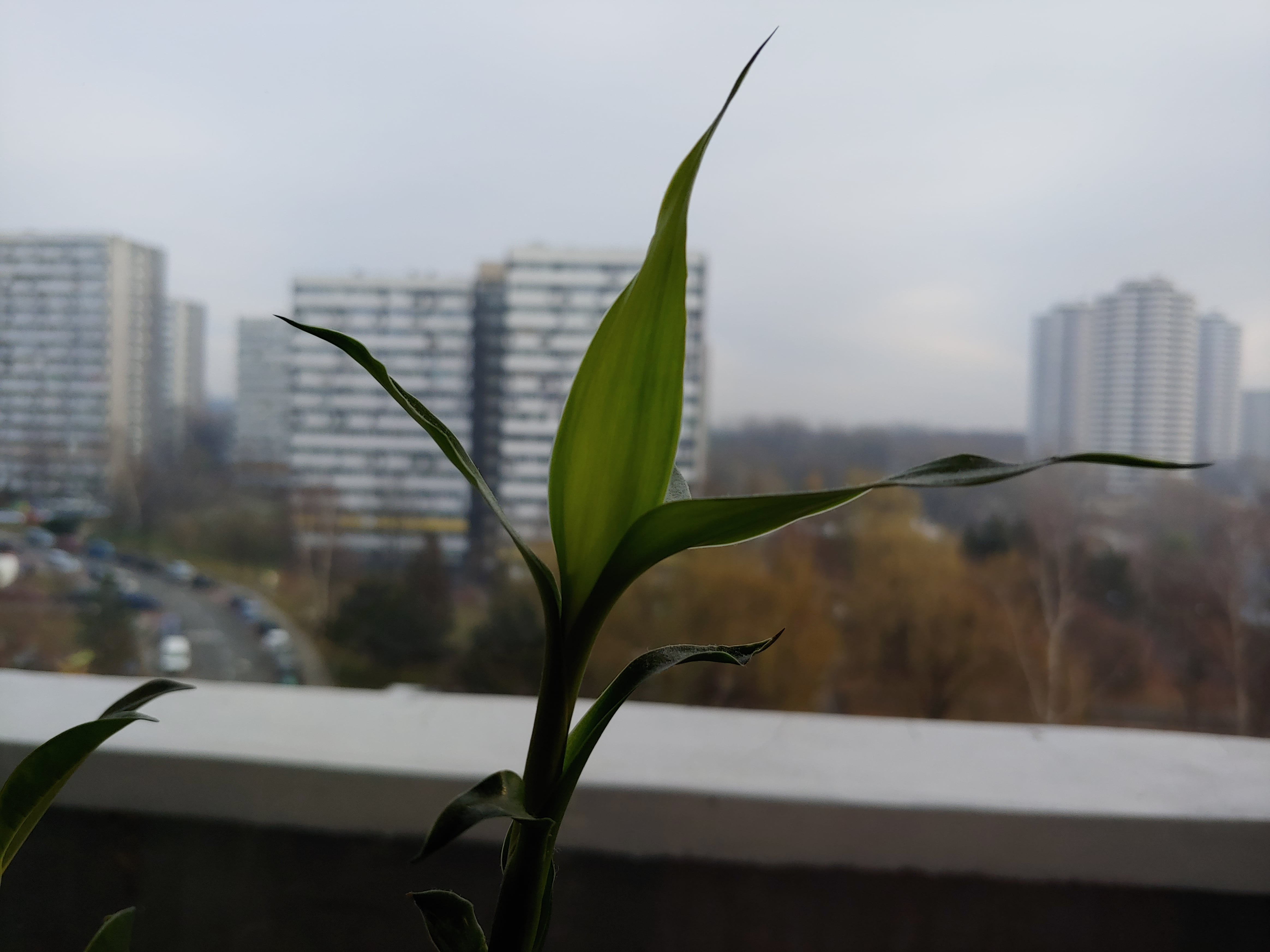 Zdjęcia makro - LG G7 ThinQ