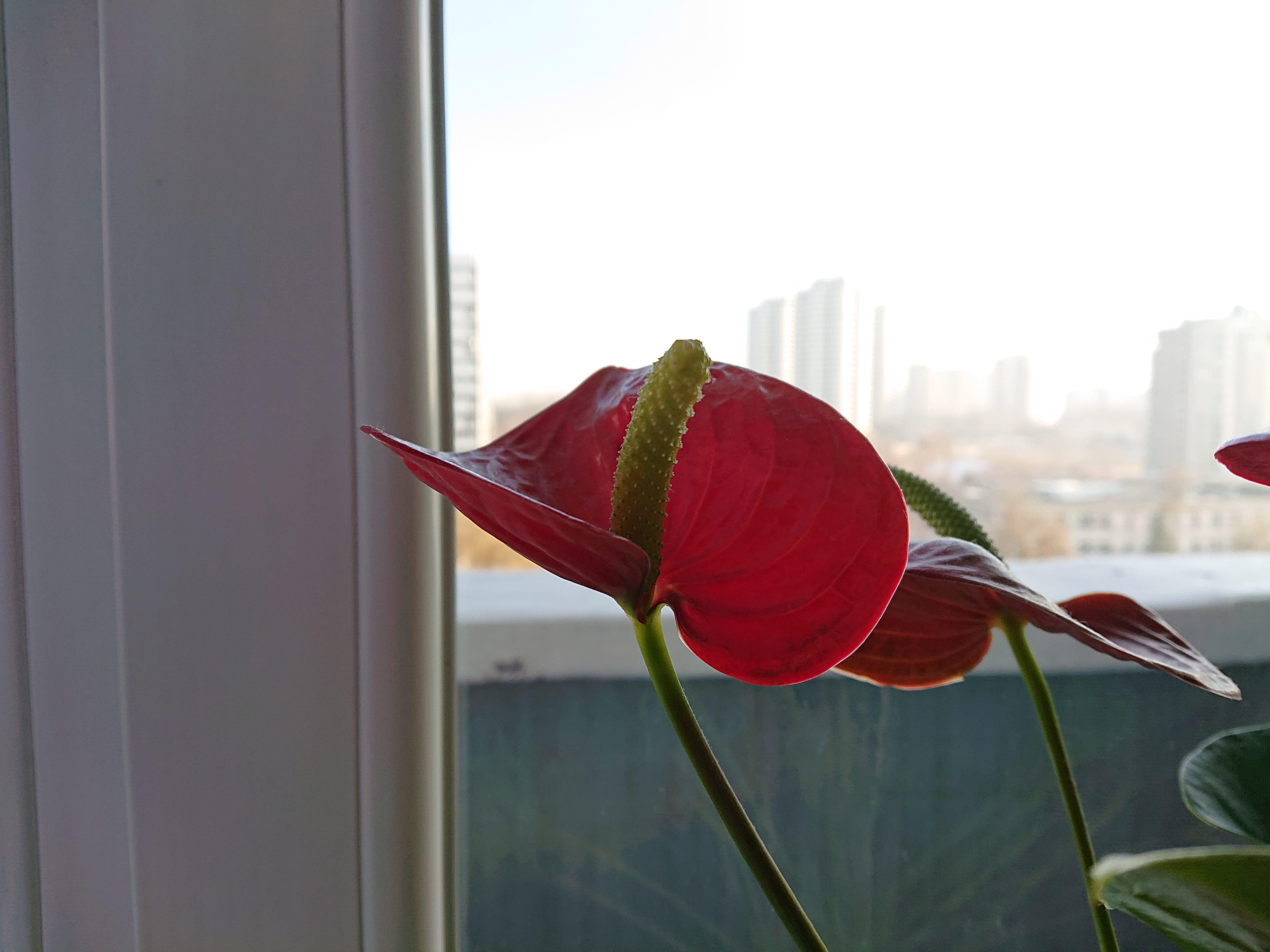 Zdjęcia makro - Sony Xperia XZ3