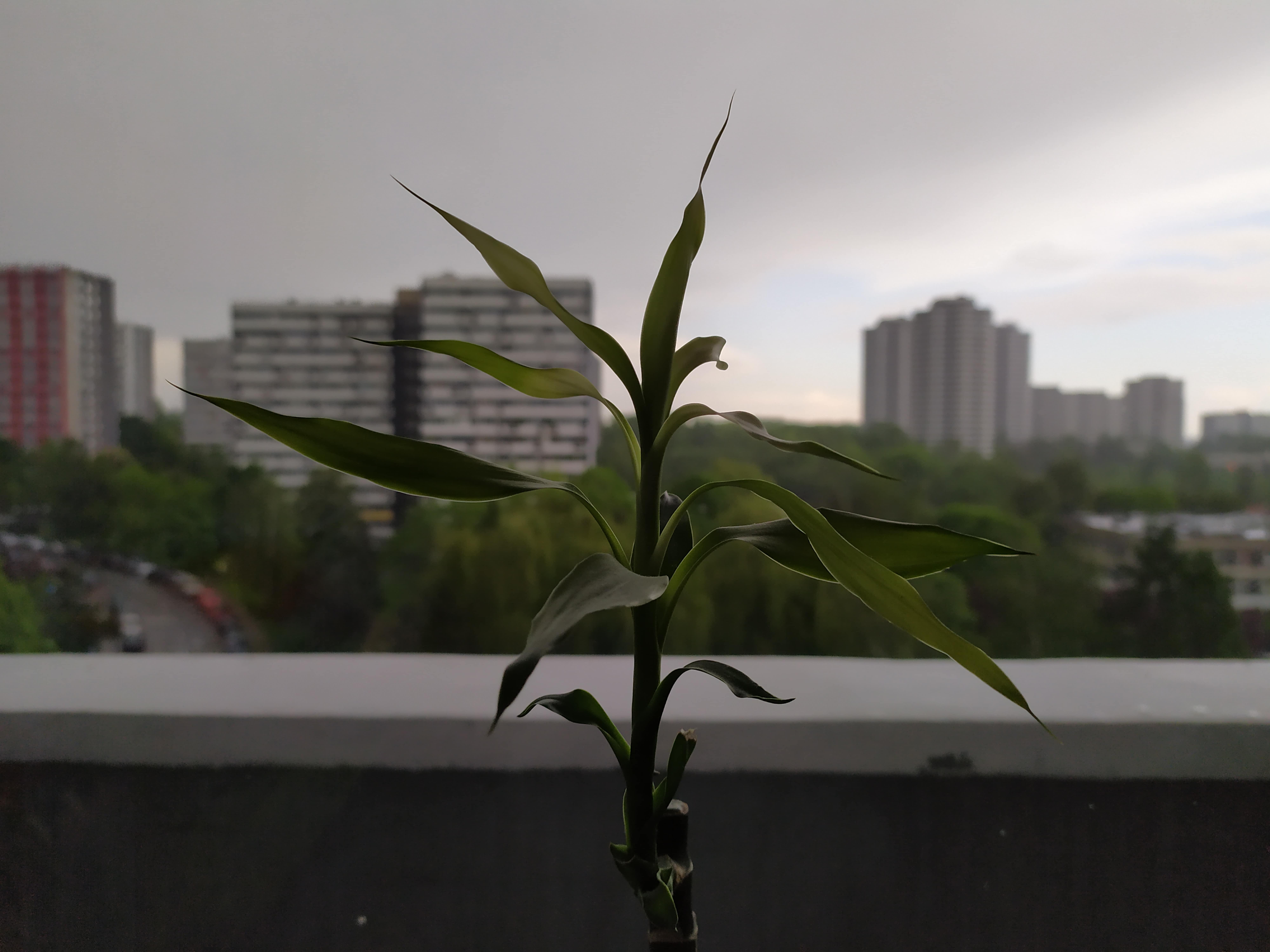 Zdjęcia makro - Redmi Note 7