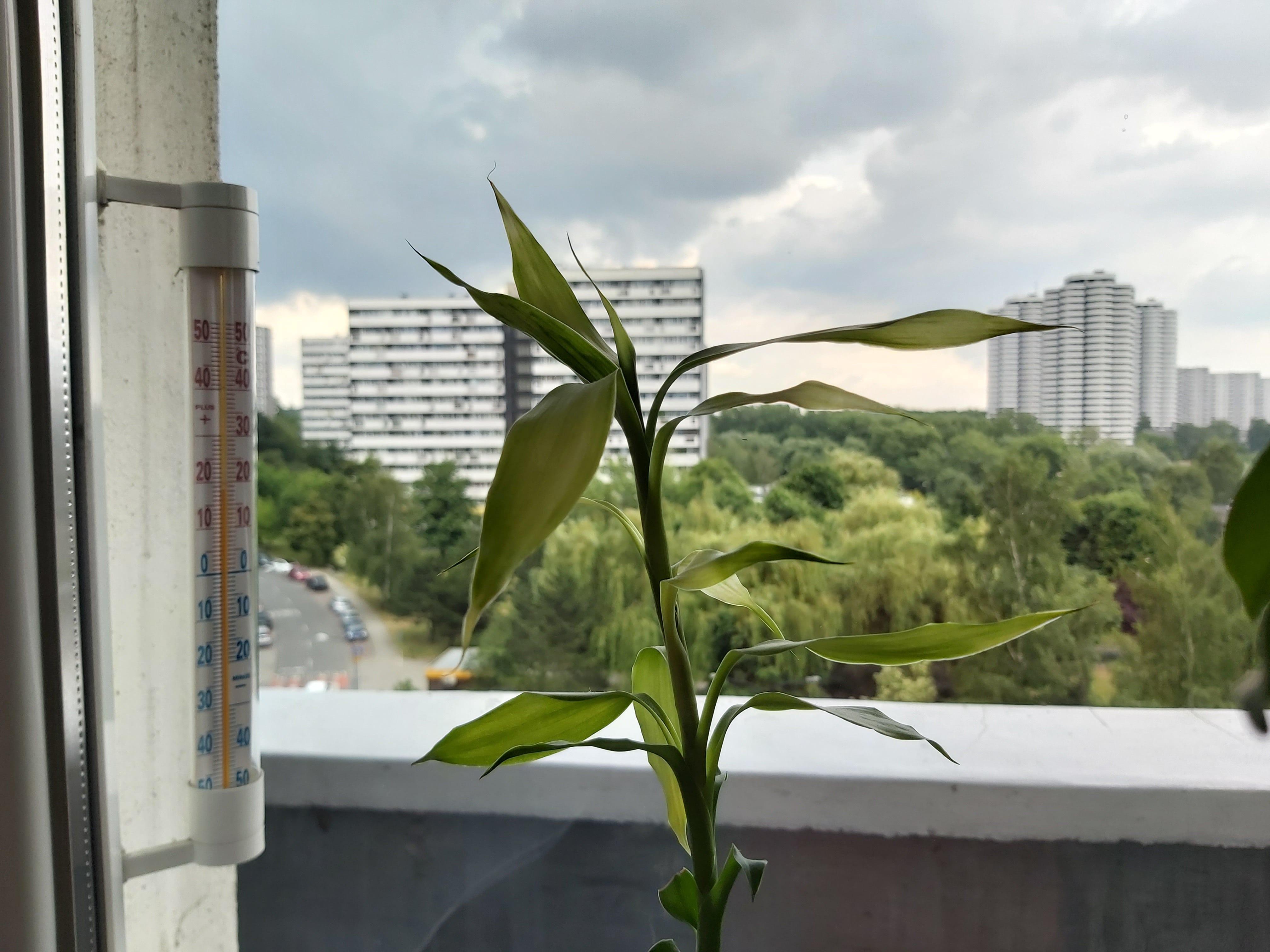 Zdjęcia makro - Samsung Galaxy A70