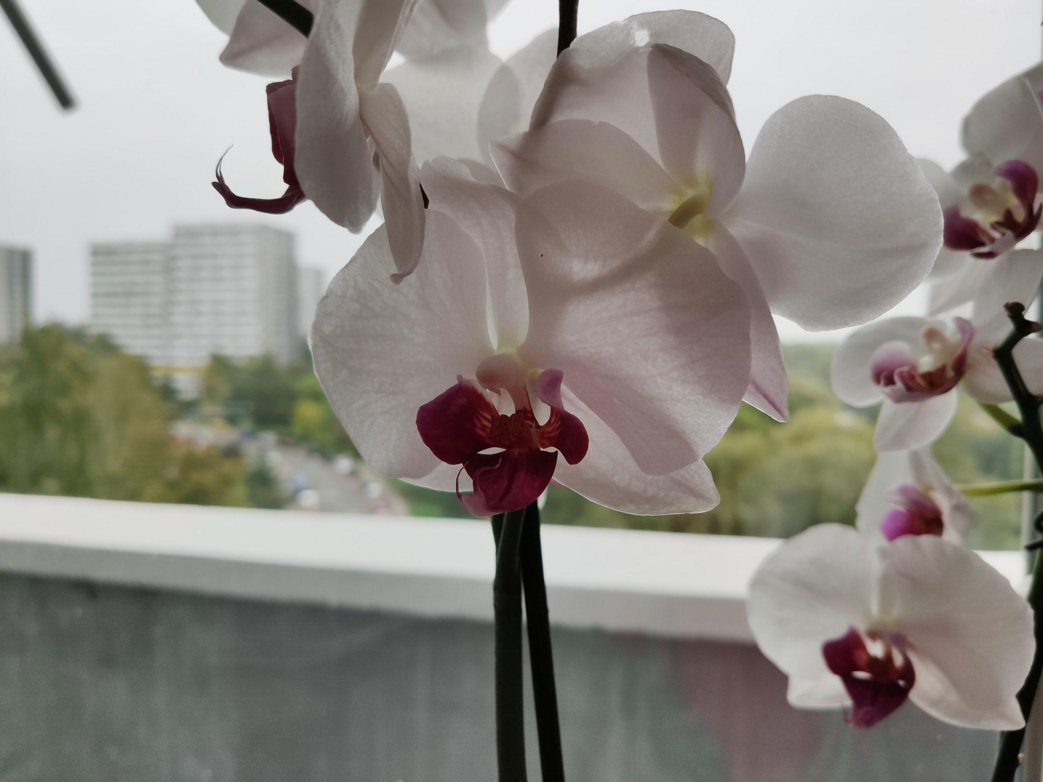 Zdjęcia makro - Xiaomi Mi 9