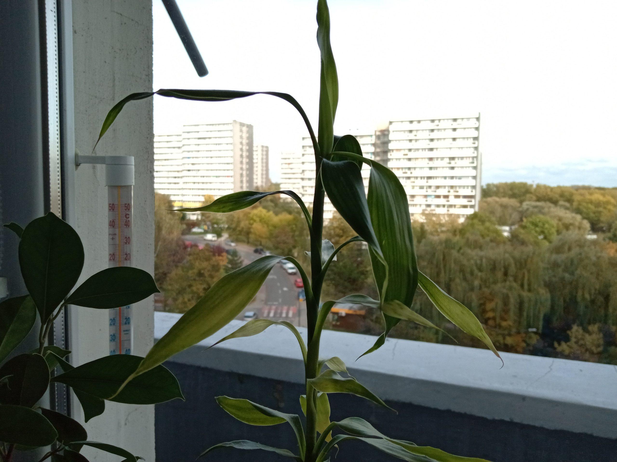 Zdjęcia makro - HTC Desire 19+